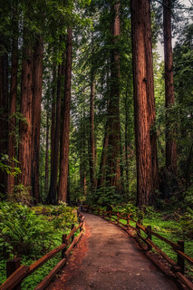 Redwood Path | by Justin in SD