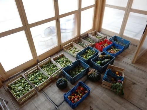 Agrocité - récolte