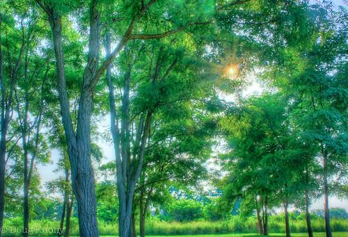 history nebraska unitedstates grove ne fortatkinson livinghistory locustgrove fortcalhoun fortatkinsonstatehistoricalpark mrsleavenworthslocustgrove
