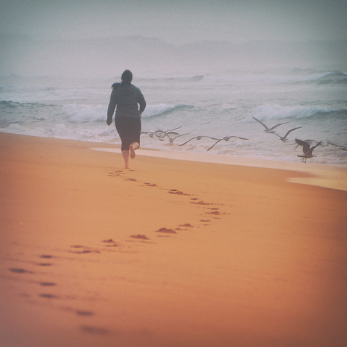 california sunset beach birds marina sand marinastatebeach montereypeninsula chasingbirds chasinglight pixelmama