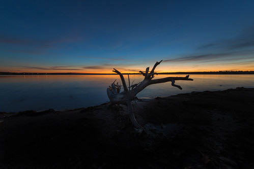 landscape lakescape seascape lake water reflections sunrise dawn daybreak lakechatfield colorado driftwood silhouette log tree beach bluehour