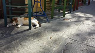 Gatto greco / Greek cat | by Luigi Rosa