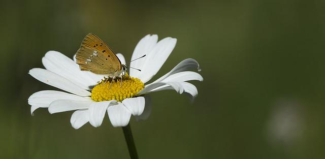 Fiori e farfalle   4