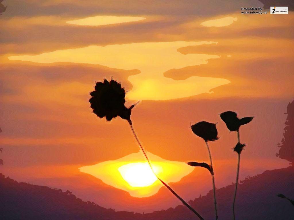 Sunflower Sunset Wallpaper Sunflower Sunset Wallpaper Flickr