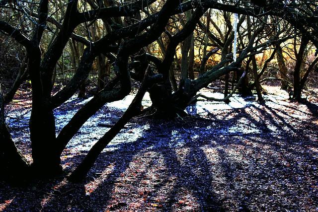 Forest Purple Ground