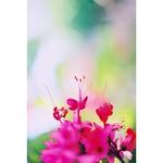 pink flower 名前がわからないけど、 好きな花♩