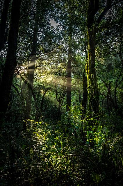 Un rayo de luz en el bosque