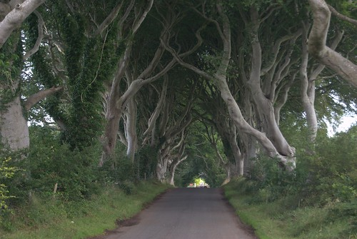 Dark Hedges Road (Country Antrim)   by Ana _Rey