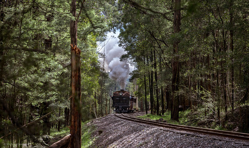 pbr sunny climax cockatoo australia trains steam sun wrightforest forest 1694 fet sunlight footplateexperiencetrain victoria spring puffingbilly au