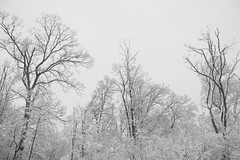 Snow IV