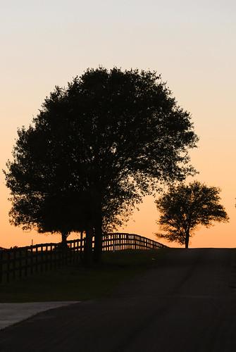 texas fieldstore wallercounty josephroad sunset dusk fence trees silhouttes road country wyojones np