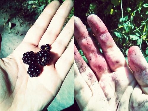 Blackberries | by Amber Fjord