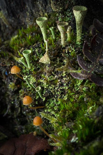 Small landscape : My garden of Eden