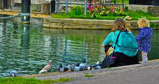 Feeding Pigeons | by sarath_d_r