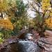 Samuel Forsyth- Boulder Creek