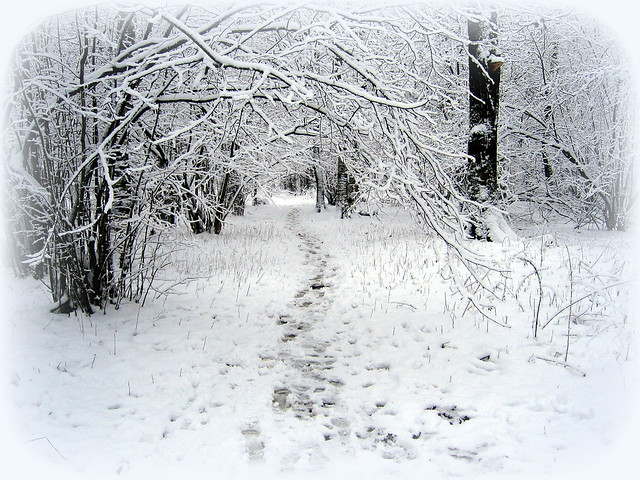 Следы на снегу.  Traces on snow.