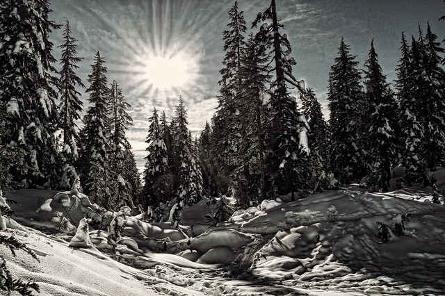 Sunshine in the snow on Mt. Seymour