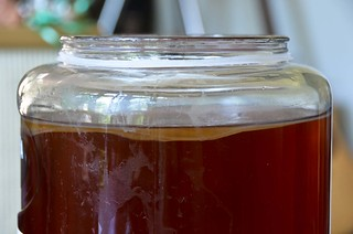 Kombucha SCOBY, Day 10 | by osiristhe
