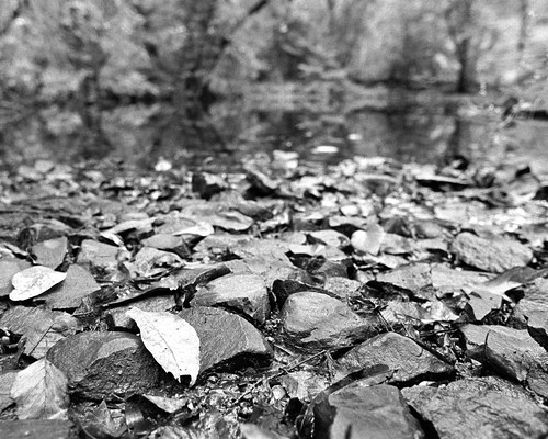 millstoneriver trix landscape winter iso1250 nature nj leaf diafine kingston nikkor24mmf28 nikonfm2 upclose rockss