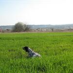 EDY DI VALTRESINARO - Ferma su coppia, al centro di un campo di grano.