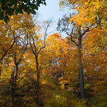 Trees of Inwood Hill