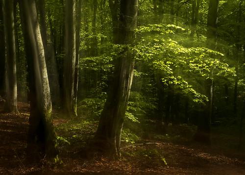 trees leaves forest spring woods sverige icm halland bleech