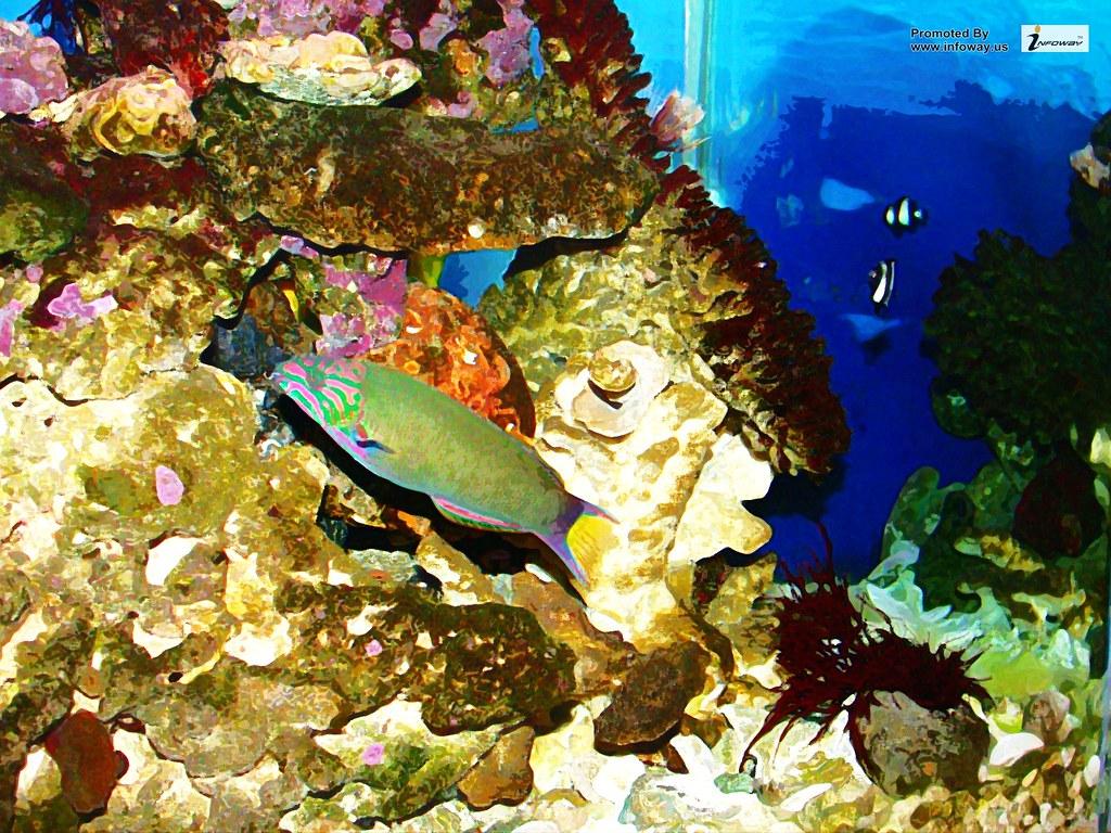 Tropical Fish Wallpaper Tropical Fish Wallpaper Flickr