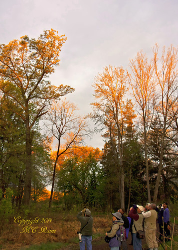 "trees nature sunrise dawn woods wildlife sanctuary naturepreserve ""golden ""magic dukefarms nj"" hour"" ""hillsborough"