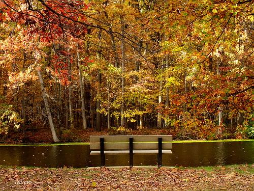 bench woods leaves view scenery lake water park fall november autumn evergreenlake oakopenings toledometroparks toledo northwestohio trees