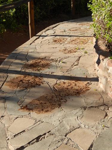 Palwag - olifant steekt over  bij lodge voetstappen