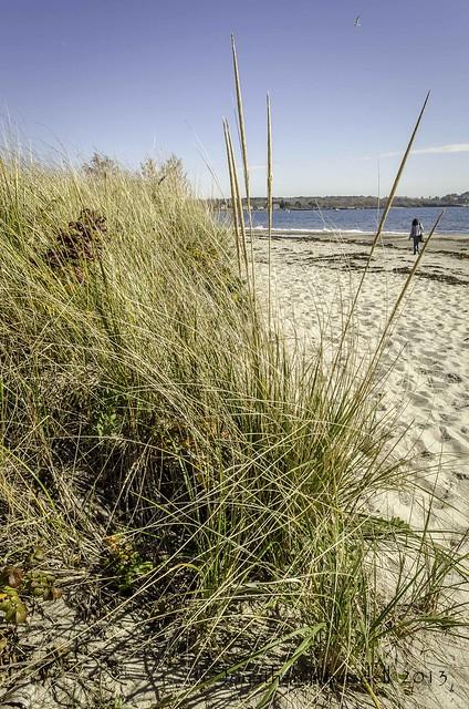 Crescent Beach State Park-1