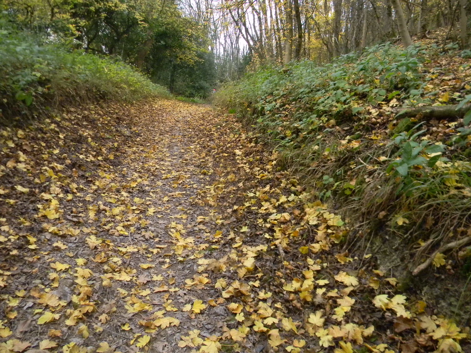 Leaves on the Path (not an excuse) Hassocks to Brighton