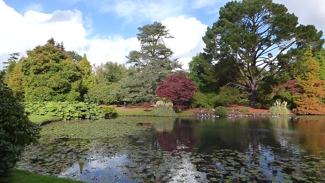 A video sweep of the autumnal colours at Sheffield Park Gardens and arboretum, National Trust