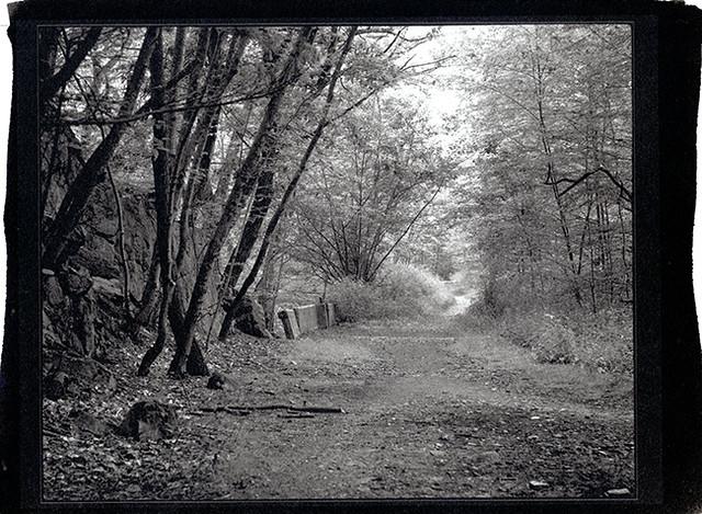 forestScan