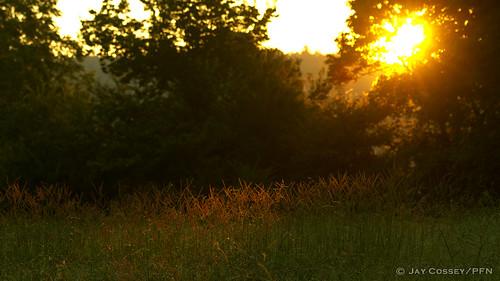meadow arkansas sunrisesunset grassland habitat horseshoebendpark bentonco photographerjaycossey landscapespictorials