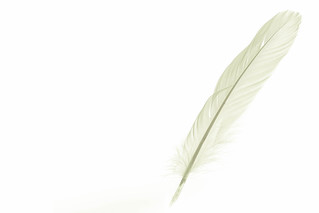 Fine-Art-Feather | by pics-n-more