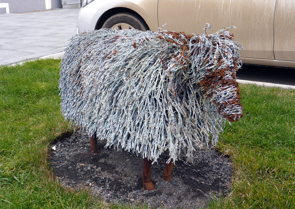 Barbed Wire Sheep