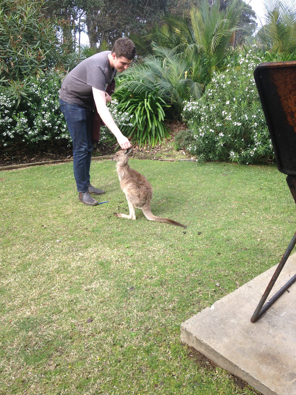 Jugan, Ashleigh; Sydney, Australia - Young Kangaroo