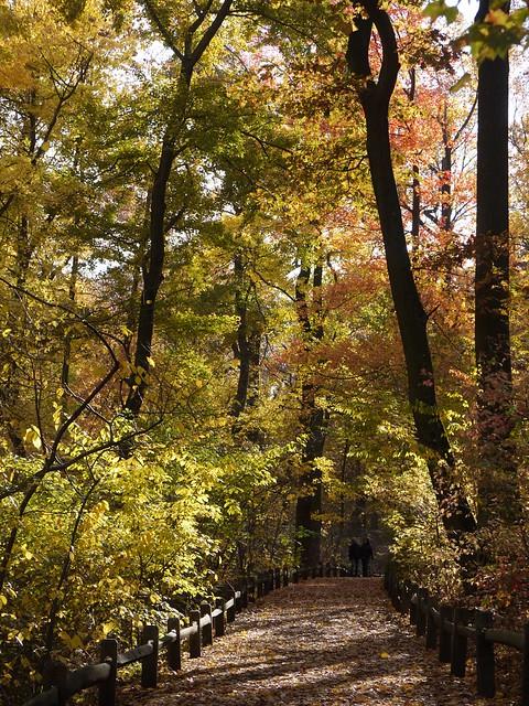 日, 2013-11-03 14:19 - Bronx Botanical Gardenの紅葉
