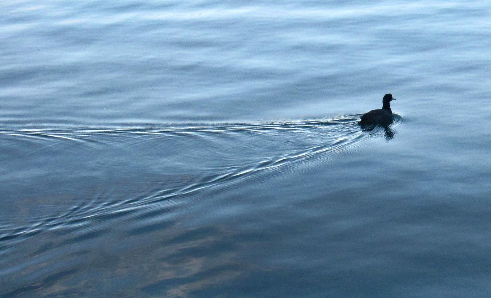 Lago Atitlan 116