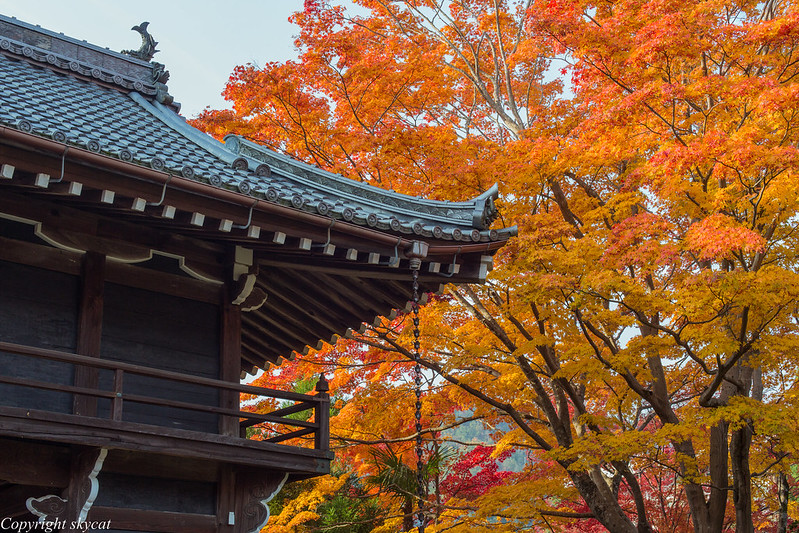 Autumn leaves beside the temple gate