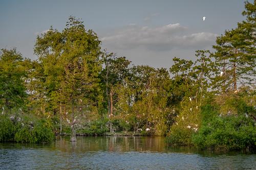 nature outdoors la louisiana