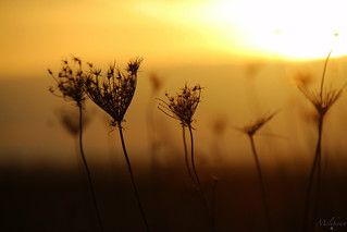 In love with the sun,,, EXPLORED | by Ani ♠ Melikyan