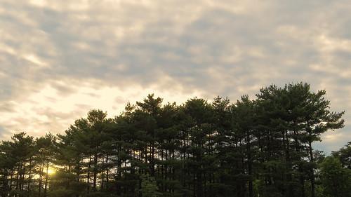 trees light sunset sun green nature clouds canon dark atardecer dawn cloudy pines rays settingsun amateurphotography sx50