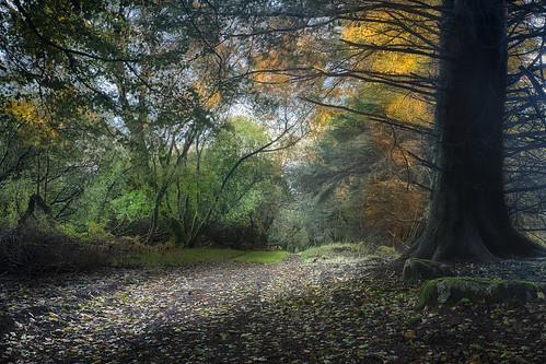 sunrise dartmoor dartmoorlandscape fernworthyreservoir canon5dmkii fernworthyreservoirdartmoor fenworthydartmoor