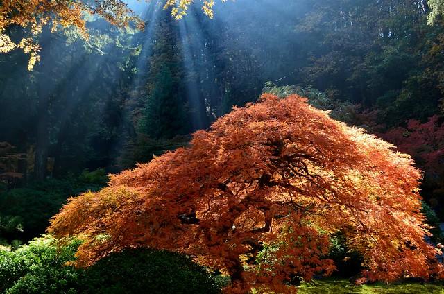 The Glowing Tree by Nina