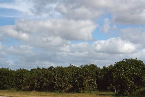 bartow plantsandtrees
