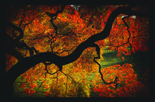 wowography wowographycom yellow usa tree shadow silhouette red photoshopcc park orange ny nikon nik newyork nature nassau mansion longislandphoto longisland landscape handheld green foliage fire fall dfine2 d90 colors colorefexpro4 autumn alienskin plantingfieldsarboretum japanesemaple explosion abstract 18200mm 2013 503252 frame analogefexpro tomreese photography 500px