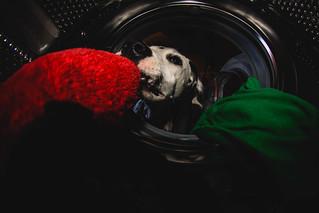 Washing machine | by Leo P. Hidalgo (@yompyz)