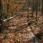 A trail